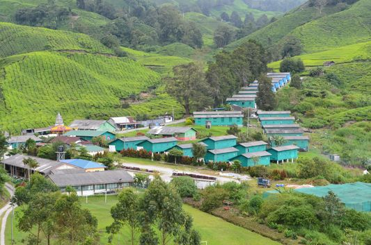 BOH Tea Estate from the restaurant in Cameron Highlands