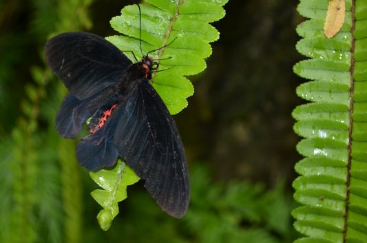 Butterfly Park in Lake Gardens in Kuala Lumpur