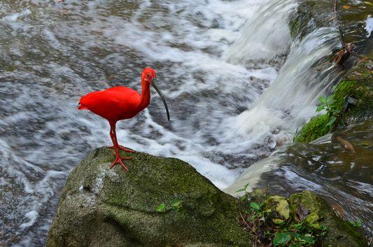 a red flamingo in KL Bird Park in Kuala Lumpur