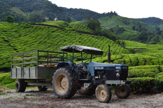 a tractor out in the BOH Tea Plantation in Cameron Highlands