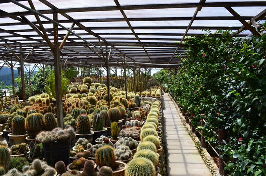 paradise of cactus in Cactus Valley