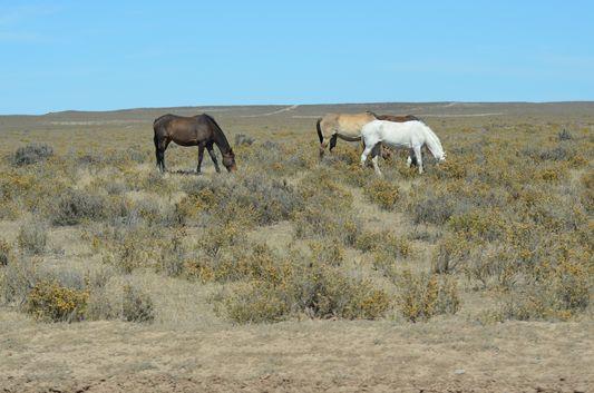 horses in Peninsula Valdes
