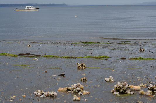 Chullec beach on Quinchao island