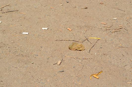a used condom in Parque de los Reyes in Santiago
