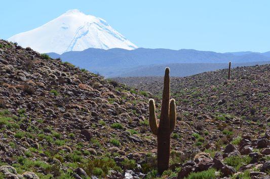 cactus in Cañon de Guatin