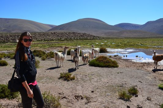 crazy sexy fun traveler with llamas in the Andes