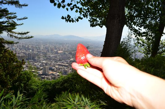 eating strawberries on top of Cerro San Cristobal