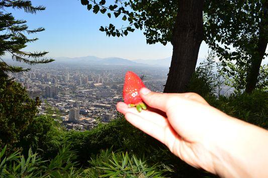 eating strawberries on top of Cerro San Cristobal