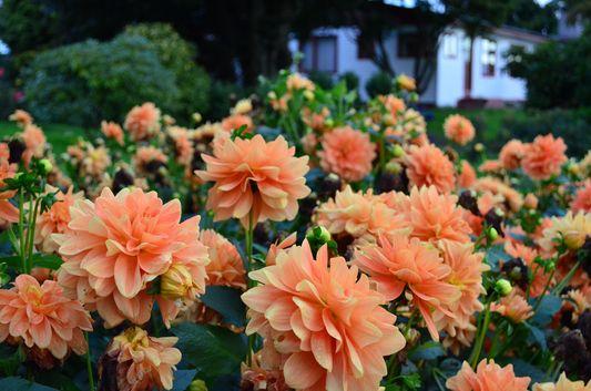flower garden in cabañas Molino Viejo