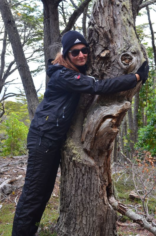 hugging a tree in Tierra del Fuego national park