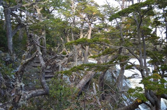 magical trees in Ensenada Bay in Tierra del Fuego
