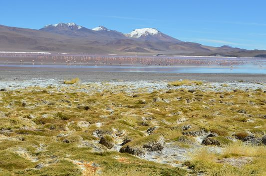 Laguna Colorada losing its red colour