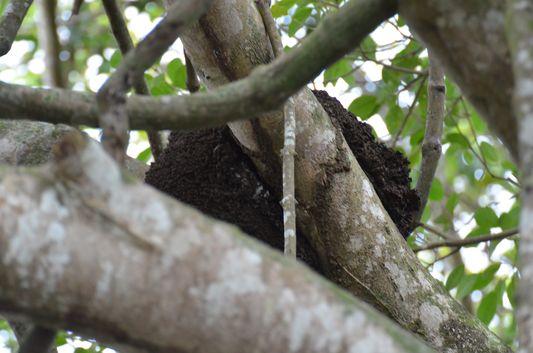 a termite nest