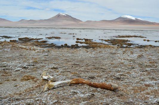 legs of a dead animal at Kqara lagoon
