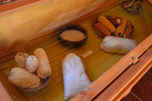 sweetcorn in the museum of Pukara de Quitor
