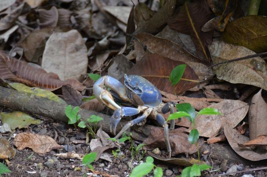a crab in the tropical garden of Congo Bongo
