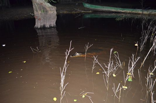 caiman at night next to our boat