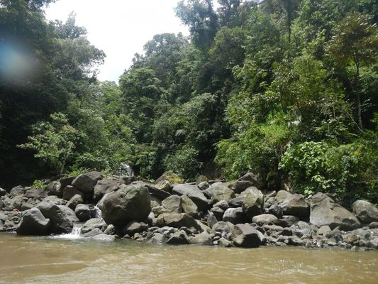 nature around Pacuare river