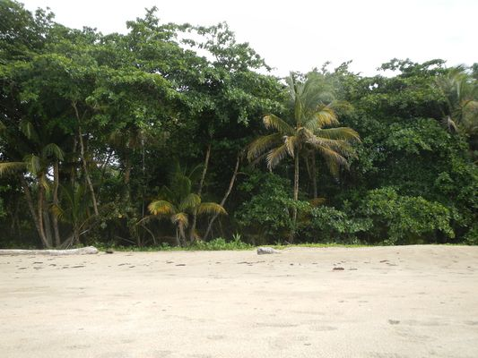 palm trees and jungle starting straight where the sand ends