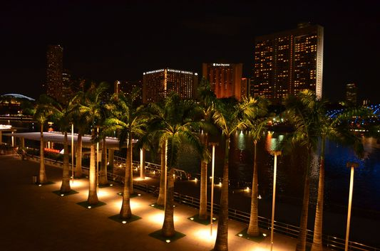palm trees in Singapore at night