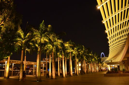 palm trees in front of Marina Bay shopping mall