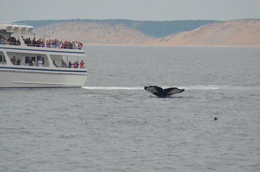 big humpback whale tail during Cape Cod whale watch