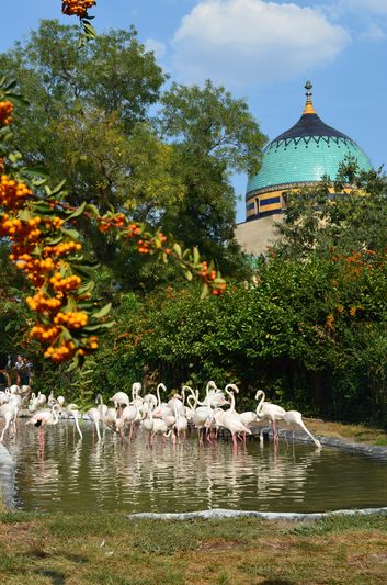 flamingoes in the Budapest ZOO