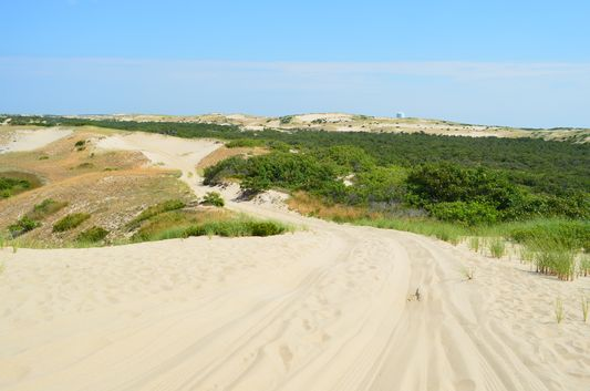 sand dunes in Cape Cod National Park Seaside
