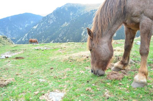 horses in the Nuria Valley