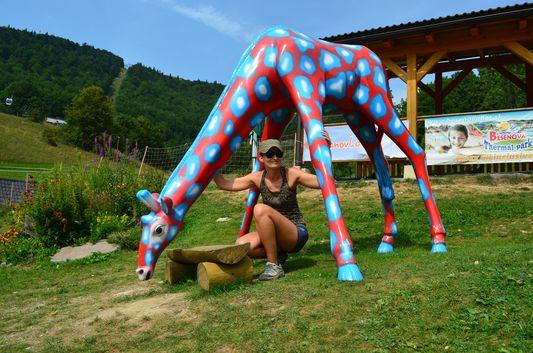 love the colourful giraffe