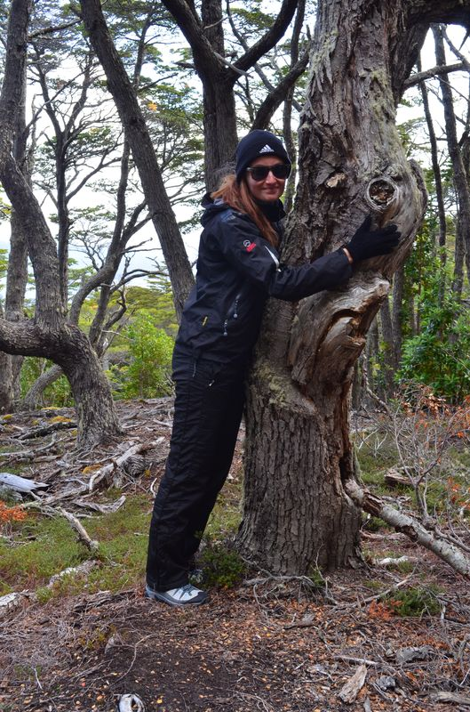hugging trees in Tierra del Fuego