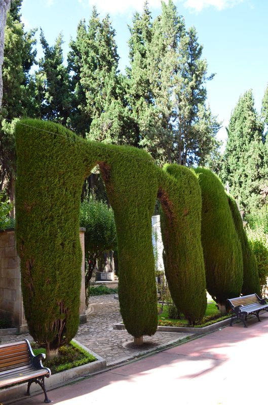 poplar tree arches in Sucre cemetery