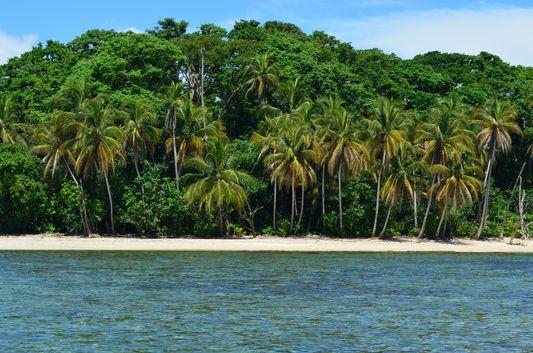 rain forest at the beach in Costa Rica