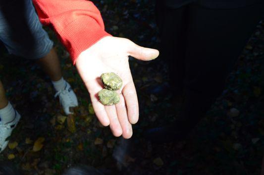 found truffles