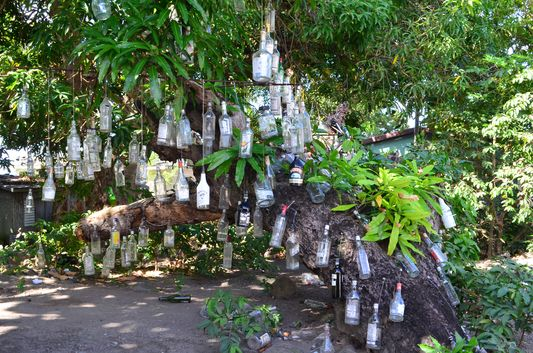 the rum tree on St. Kitts