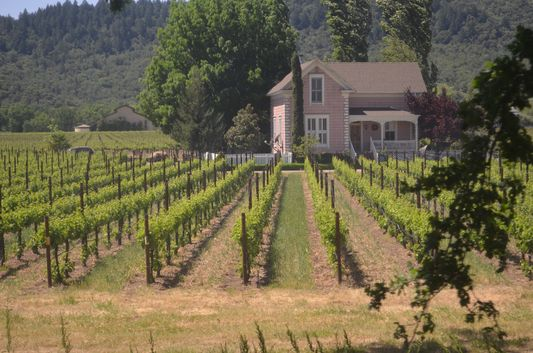 living in a Napa Valley vineyard