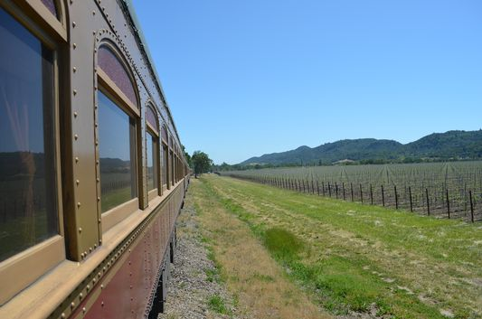 observing the vineyards from Wine Train
