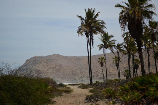 Las Palmas beach palm trees