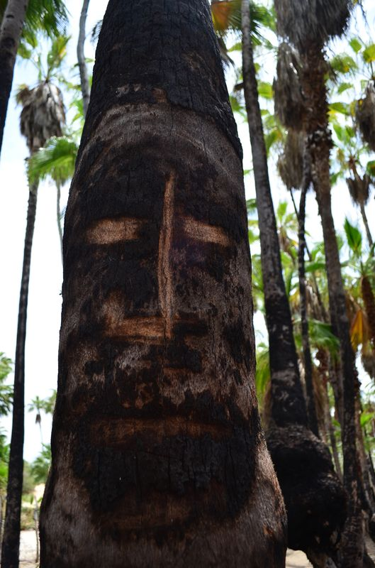 a face carved on a palm tree