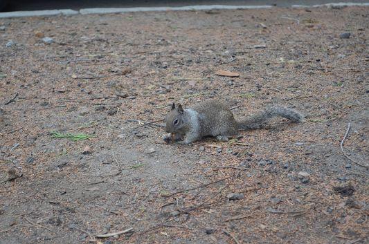 a squirrel in Yosemite Valley