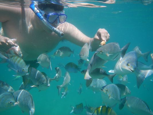feeding fish in Chileno Bay