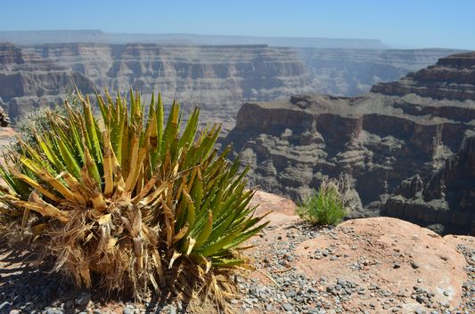 first view of Grand Canyon from Guano Point