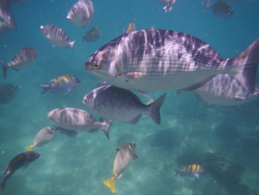 fish so close to me when snorkeling in Los Cabos