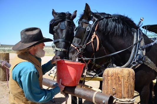 giving water to horses at Hualapai Ranch Grand Canyon West Rim