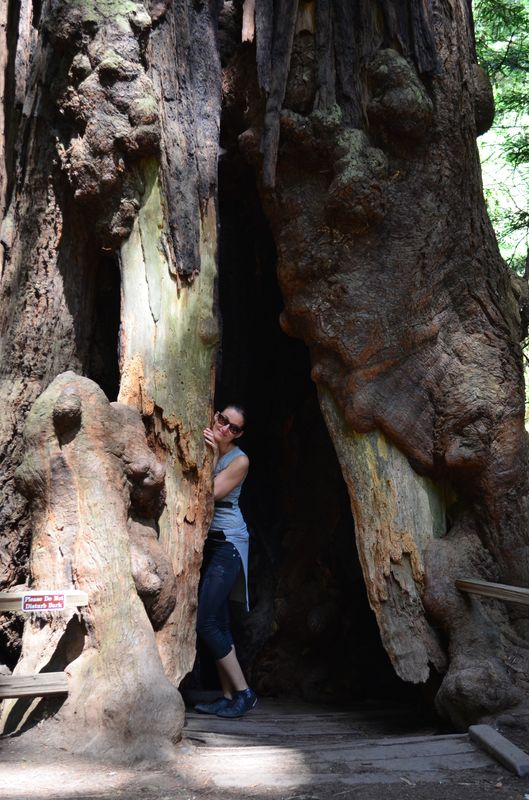 hiding in a coastal redwood in Muir Woods