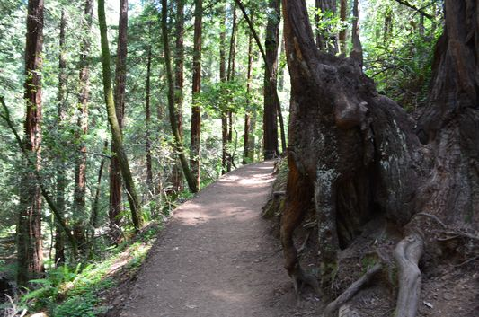 hiking the Hillside Trail in Muir Woods