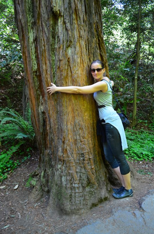hugging a coastal redwood tree in Muir Woods