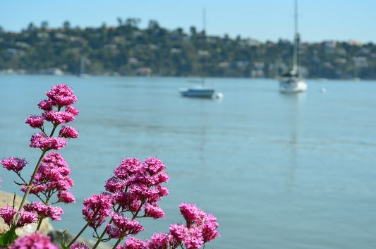 more flowers along the Sausalito waterfront