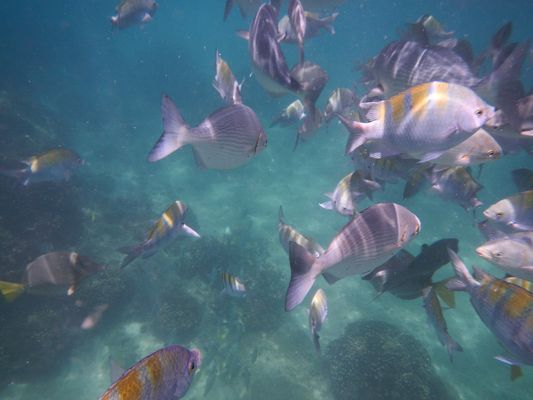 snorkeling in Los Cabos with many fish