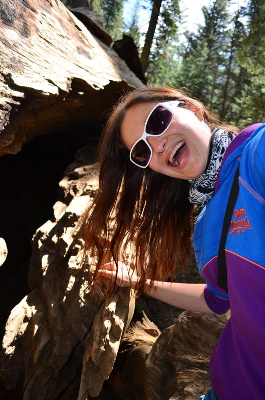 survived walking through the fallen giant sequoia in Tuolomne Grove